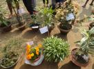 Flower Show by the Youth of CBC (Youth Festival first day.)